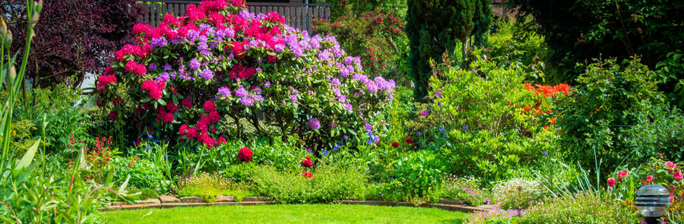 Blühpflanzen: Kandler Garten-Landschaftsbau Göttingen, Bovenden